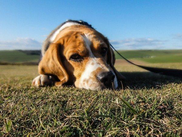 1-animal-dog-pet-sad